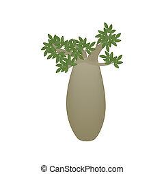 Kingia australis icon, isometric 3d style - Kingia australis...