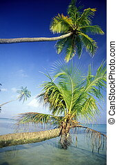 ASIA INDIAN OCEAN MALDIVES TROPICAL PALM - palm trees on the...