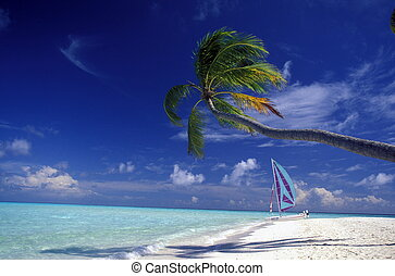 ASIA INDIAN OCEAN MALDIVES SEASCAPE BEACH - a beach with the...