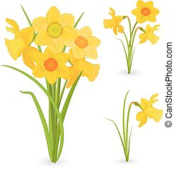 collection bouquet of daffodils. spring flowers for your design