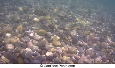 Pebbles on bottom of the Mediterranean - Pebbles on the...