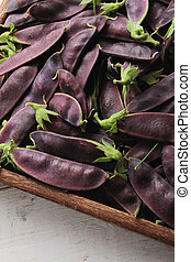 purple mange tout - fresh purple mangetout