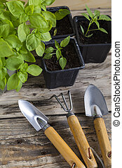 Plants with gardening tools