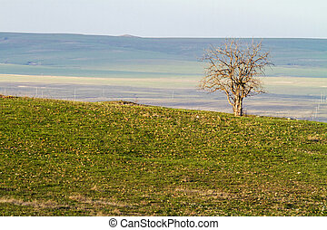 lone tree, Flint Hills, Kansas - lone tree in early spring,...