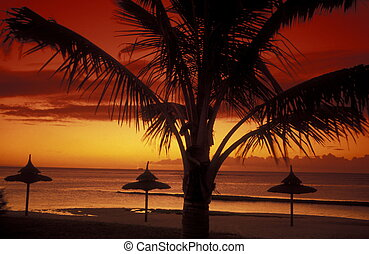 INDIAN OCEAN MAURITIUS BEACH SUNSET - a sunset on a beach on...