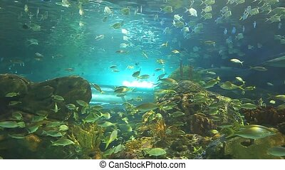 Huge schools of tropical fish swim with sharks in a coral...