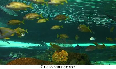 Close view of a shark swimming among huge schools of...