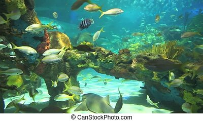 Colorful coral encrusted reefs with large numbers of tropical fish