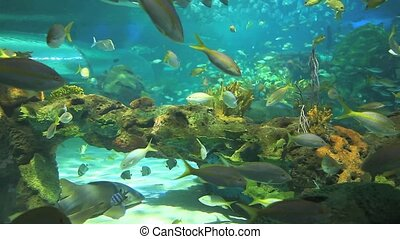 Colorful coral encrusted reefs with large numbers of swimming tropical fish