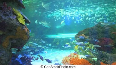 Colorful tropical coral encrusted reefs with large numbers of tropical fish