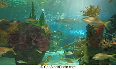 Large Sharks and colorful tropical fish swim in a coral reef...