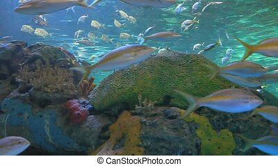 Large schools of fish drift in a coral reef - A Large...