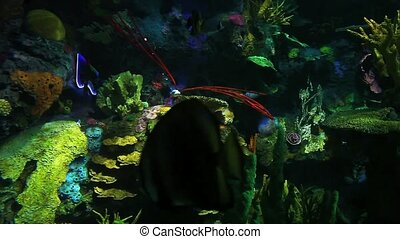 Many Colorful Tropical Fish swim in beautiful coral