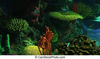 Numerous Tropical Fish swim in colorful coral - Tropical...