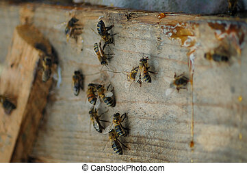 Bees over wood