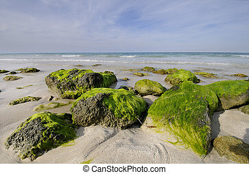 Rocky beach with seaweed, Santa Maria, cuba - View of...