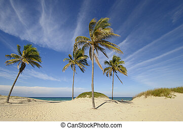 Tropical beach at Santa maria del mar, cuba - View of...