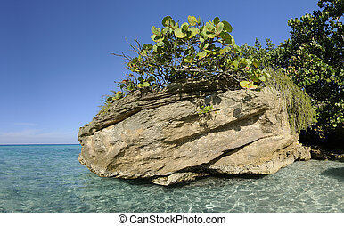 Rock with vegetation on cuban shore - Rock with tropical...