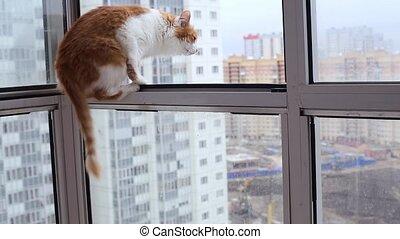 Cat Jumps on the Open Balcony Window HD