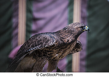 wildlife, exhibition of birds of prey in a medieval fair,...