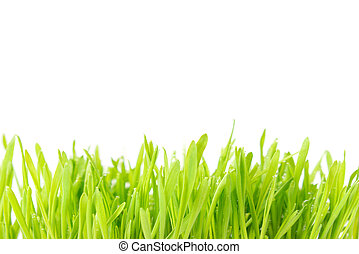 Green grass texture isolated on white background. Plant with...