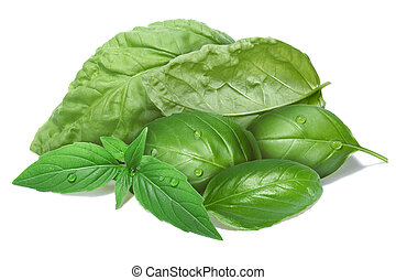 Basil leaves, different cultivars - Basil leaves grouped...