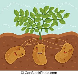 Potato grown underground. Vector flat cartoon illustration