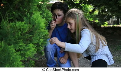 Kids exploring nature - Little girl and boy is playing on...