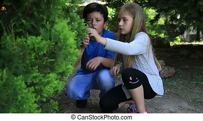 Girl and boy looking at tree leaves - Little girl and boy is...