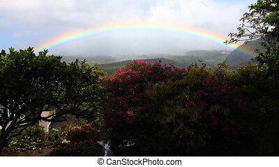 Rainbow over a garden in the tropics - A rainbow over a...