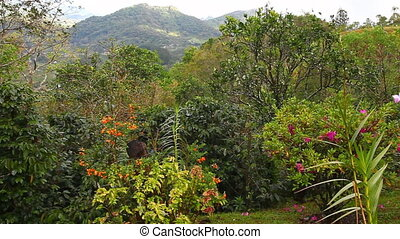 Colorful garden in the tropics - A colorful garden in the...