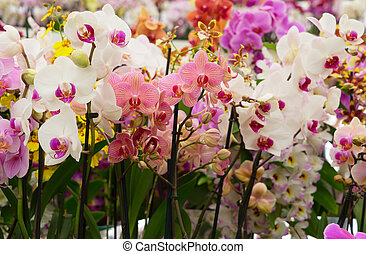 Bunch of orchids - Set of fresh multicolored bloomig orchid...