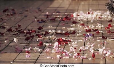 Wind get up beautiful petals of rose flowers on street. White and red. Summer sunny day. Warm shades
