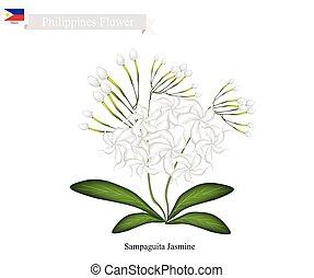 Sampaguita Jasmine, The National Flower of Philippines -...