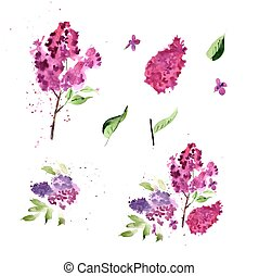 Watercolor lilac flower illustration