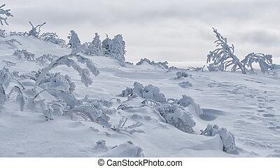 Snowy trees, Slovakia - Snowy trees in Vratna, Slovakia