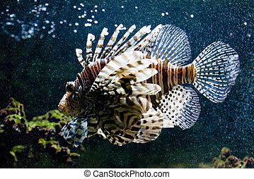 Common lionfish portrait