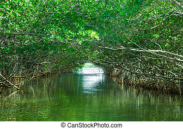 Mangroves - Eco-tourism image of Mangroves in Everglades...