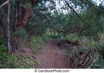 Path in Ironwood Forest on North Shore, Oahu, Hawaii...