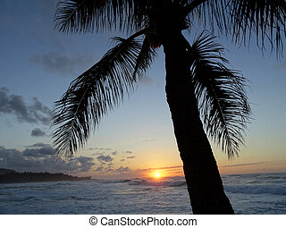 Sunset through the Coconut Tree over ocean with Waves rolling