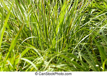 Overgrown Grass - Overgrown grass in need of being mowed...
