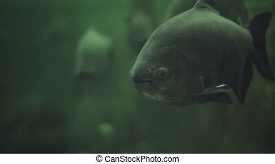 Many beautiful different fishes swimming in huge aquarium...