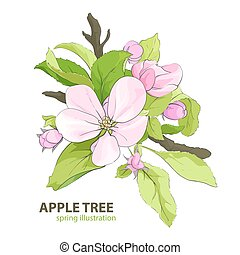 Apple tree flowers - floral illustration of apple tree...