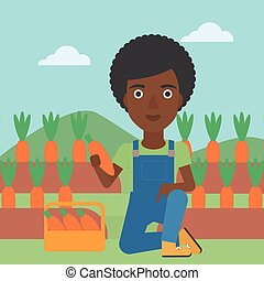 Farmer collecting carrots - An african-american woman...