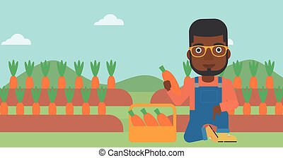 Farmer collecting carrots - An african-american man...