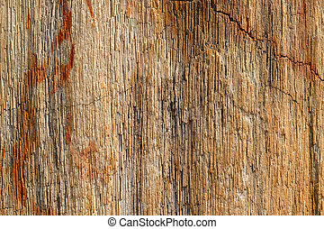 Background texture photo of petrified ancient wood changing...