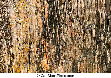 Closeup background texture photo of petrified ancient wood...