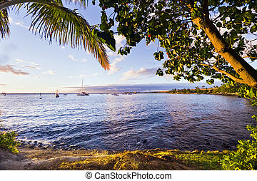 Maui Coast at Lahaina - Tree branches and palm fronds...
