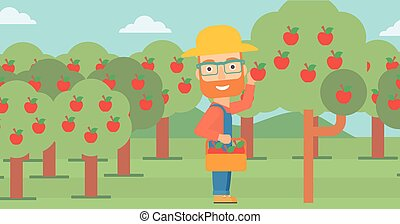 Farmer collecting apples - A hipster man with the beard...