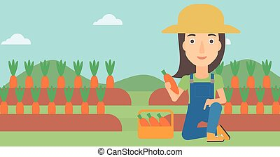Farmer collecting carrots - A woman collecting carrots in...